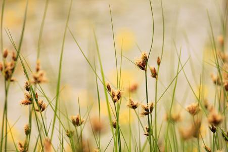 读诗 晴日暖风生麦气 绿阴幽草胜花时
