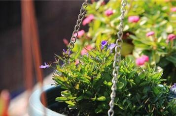 养花需要什么土壤 种植养花的土壤怎么弄