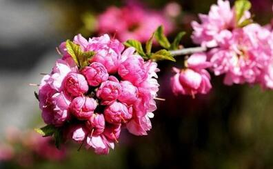 花卉养护的知识 刚买到家的花卉怎么护理