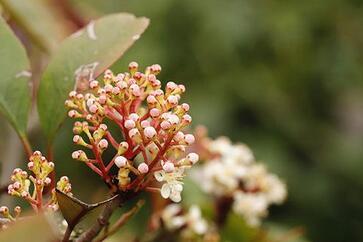 养花经验知识 花卉的防治以及害虫的分类
