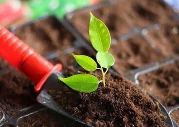 养花土壤肥料制作 养花肥料都怎么自己弄