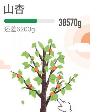 蚂蚁森林新品树种 什么是蚂蚁森林山杏树